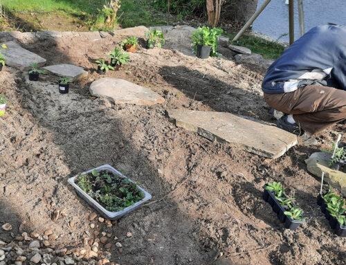 Umgestaltung eines Vordergartens auf der Heimaterde